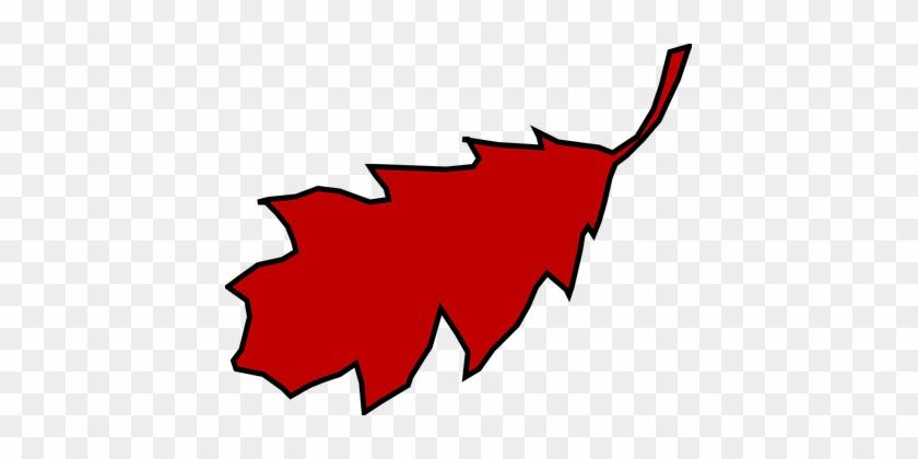Leaf, Oak, Red, Fall, Autumn, Season - Red Oak Leaf Clipart #1193855