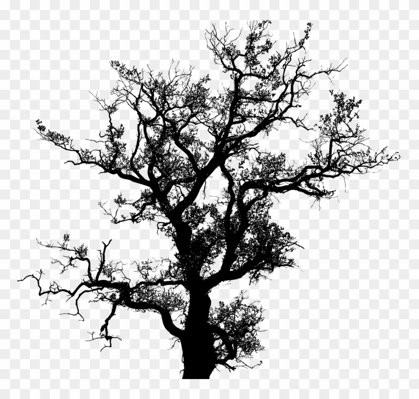Tree, Leaves, Leaf, Nature, Ecological, Environment - Old Tree Without Leaves Png #1193902