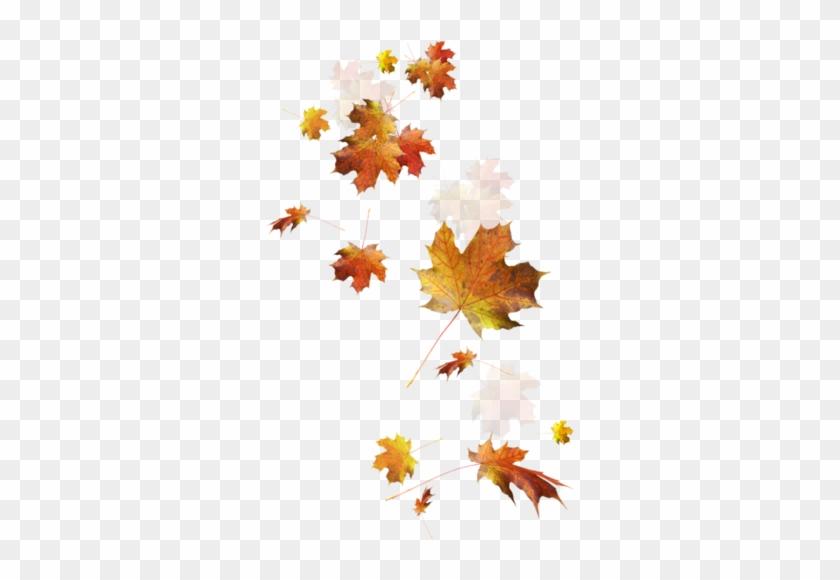 Feuilles D'automne Série - Autumn Leaves Falling Png #1193967