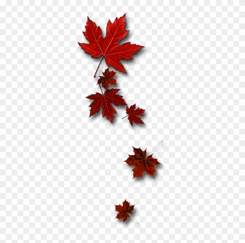 Leafs Toronto Maple Leafs Free Transparent Png Clipart Images Download