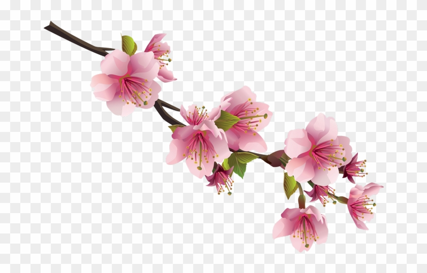 Cherry Blossom Flower Clip Art Anese 1195488