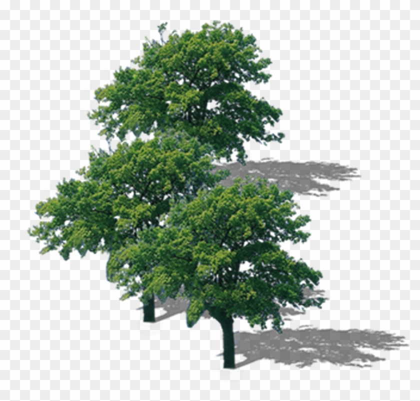 La Rama Superior Del Árbol De Descarga - Png Format Trees Top View Png #1195733