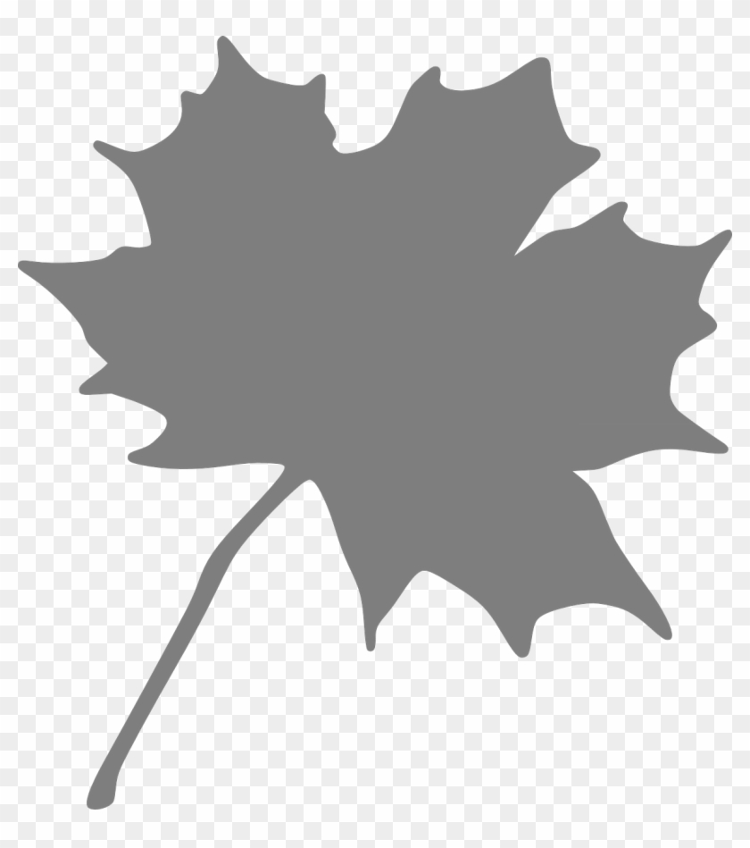 picture relating to Printable Leaves referred to as No cost Printable Leaf Stencils - Maple Leaf Clip Artwork - Totally free