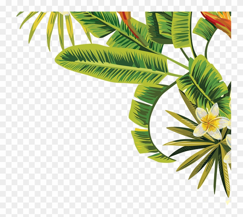 Leaves Leaf Tropical Green Palmtree California Nature Tropical Palm Leaves Png Free Transparent Png Clipart Images Download Tropical leaf palm print, showing various tropical plants together in one poster. leaves leaf tropical green palmtree