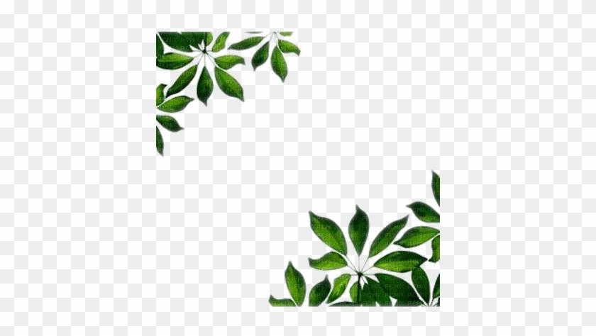 Leaf Frame Wonderful Picture Images - Green Leaves Border Png #1196213