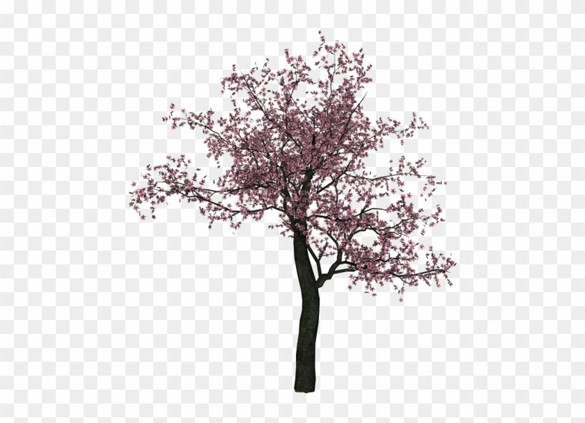 Almond Tree Branch Black And White Download - Cherry Blossom Tree Png #1210600