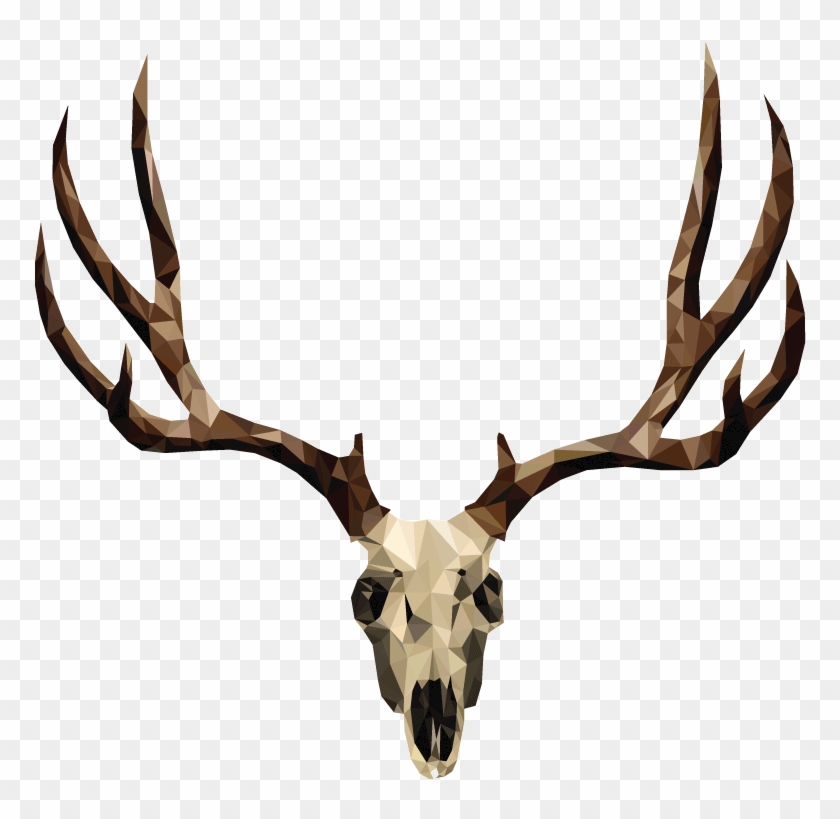 Mule Deer Skull Drawing #1210625