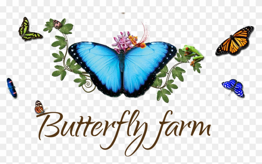 come and discover the secrets of exotic butterflies family