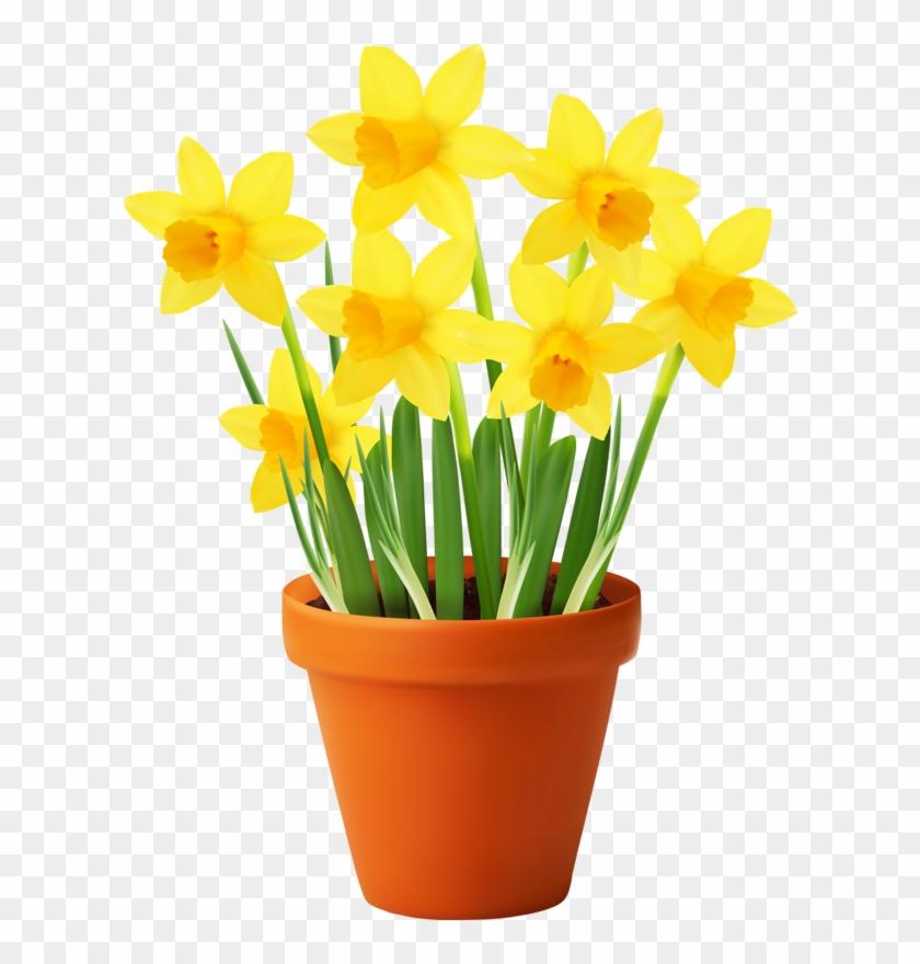 Publicat De Eu Ciresica La - Flower Pot Garden Clipart Png ...
