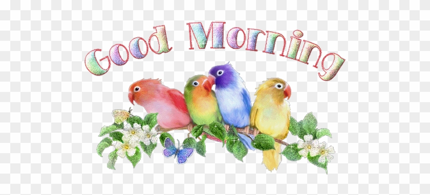 Good Morning Animation Images Bird Sound Effect Animated Love Birds Gif Free Transparent Png Clipart Images Download