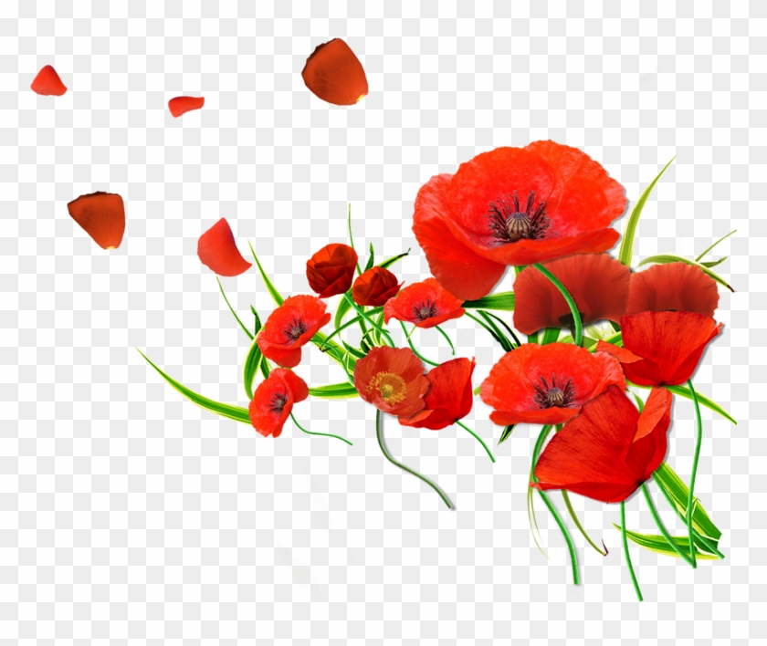 Remembrance poppy flower common poppy watercolor flowers red png remembrance poppy flower common poppy watercolor flowers red png mightylinksfo
