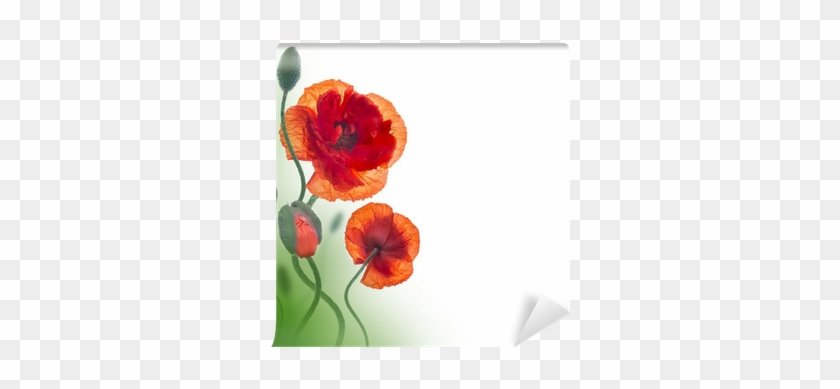Red Poppies Field And Blue Cornflowers Floral Background Have A