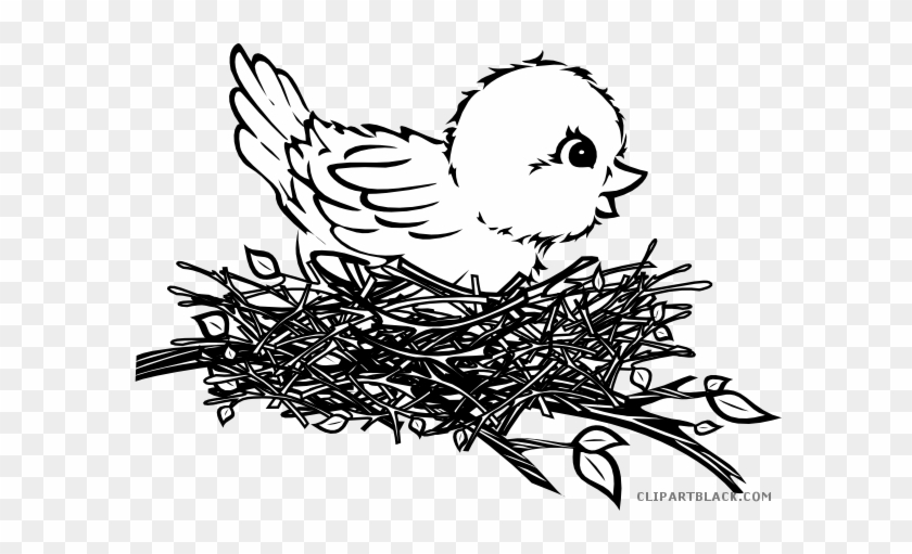 Black And White Chick Animal Free Black White Clipart - Bird In Nest Drawing #1225907