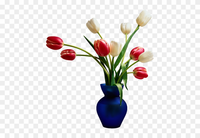 Flowers In Vase White And Red Colour Tulips With Leaves Beautiful