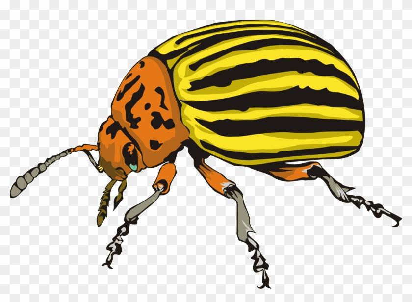 Big Image - Beetle Clipart #1233534