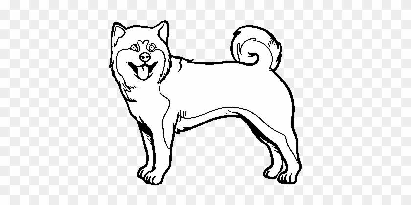 Dibujo De Perro Akita Inu Para Colorear - Dibujar Un Perro De La ...