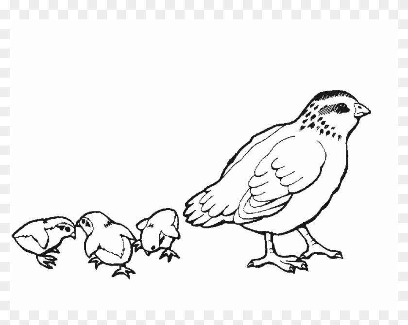 Dibujos Para Colorear De Animales De La Granja Con Codorniz Dibujo