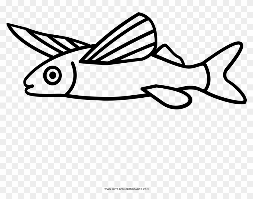 Dibujo De Pez Volador Para Colorear Pez Volador Dibujo Para