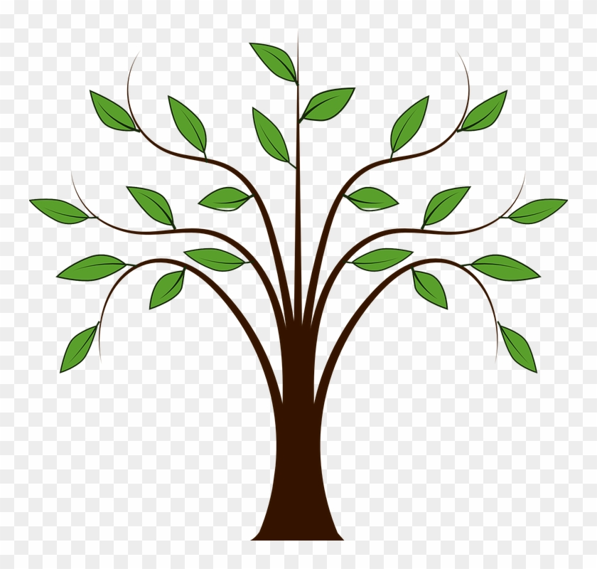 Jungle Plant Cliparts 15 Buy Clip Art Cartoon Tree With Branches Free Transparent Png Clipart Images Download Cartoon tree with branches and leaves 3d model. jungle plant cliparts 15 buy clip art