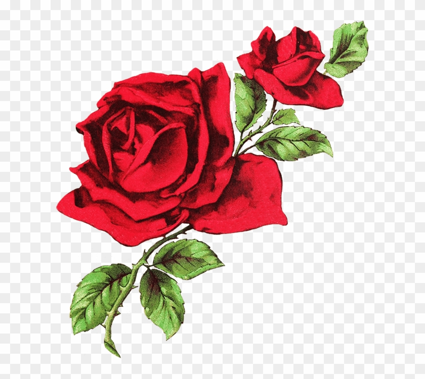 drawn rose transparent white and red aesthetic header free