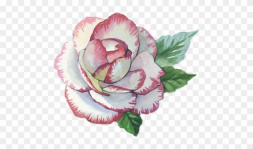 Rose Roses Paint Watercolor Watercolour Flower Pink - Glauben-hoffnungs-liebe-blumentasse Zweifarbige Tasse #1250527