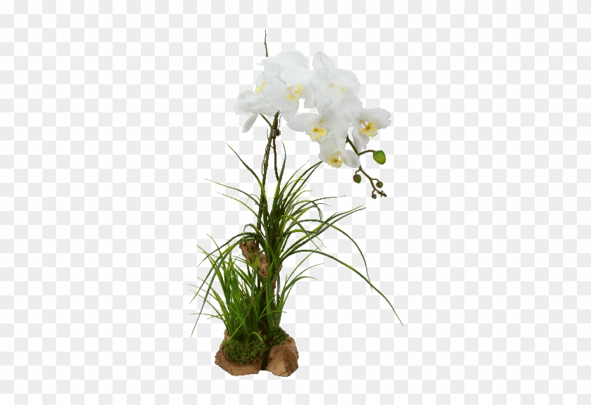 Artificial orchid double white white orchid flowers png hd free artificial orchid double white white orchid flowers png hd mightylinksfo