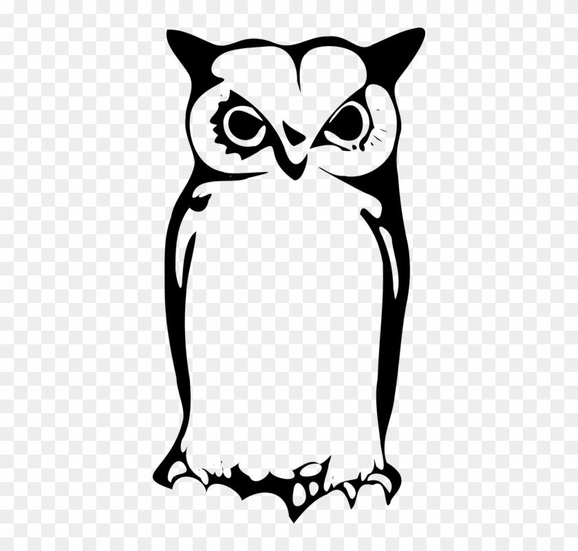 Owl Owlet Eagle Owl Animal Bird Sitting Burung Hantu Tato
