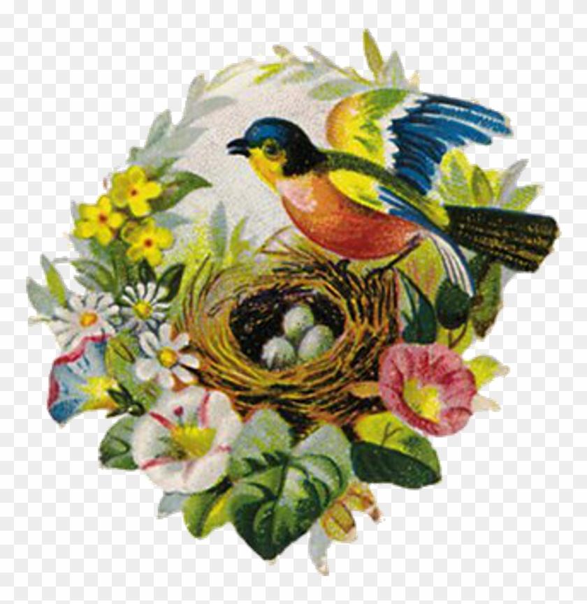 Bird and nest | ClipArt ETC | Drawings, Bird sketch, Bird line drawing
