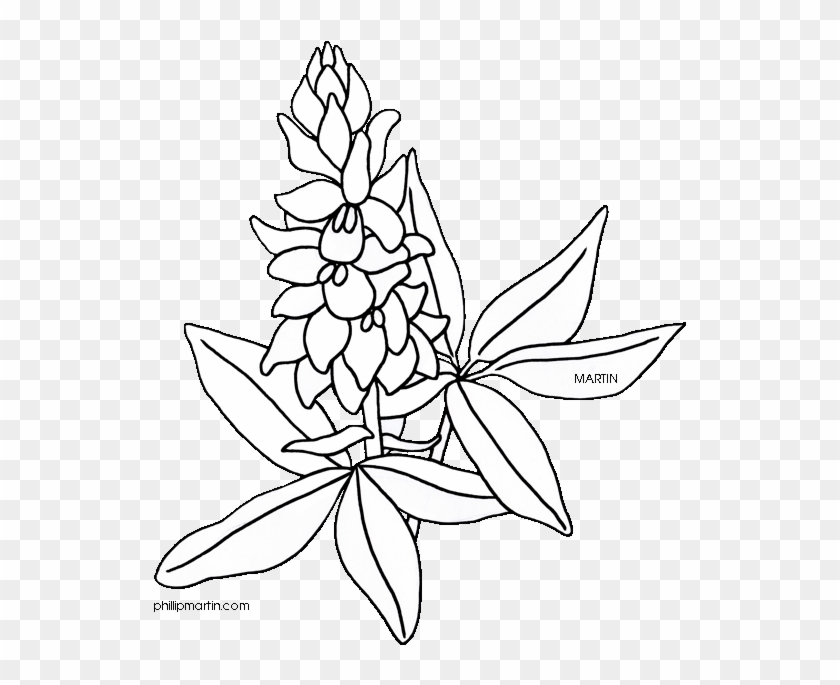 Bluebonnet Coloring Page Eassume Com Ahmed Texas State Flower