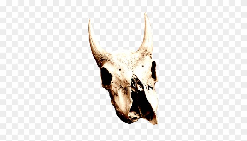 Cow Skull In Desert - Desert Skull Png #201591