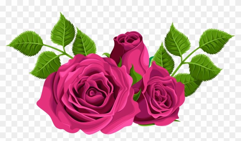 Centifolia Roses Desktop Wallpaper Flower Clip Art