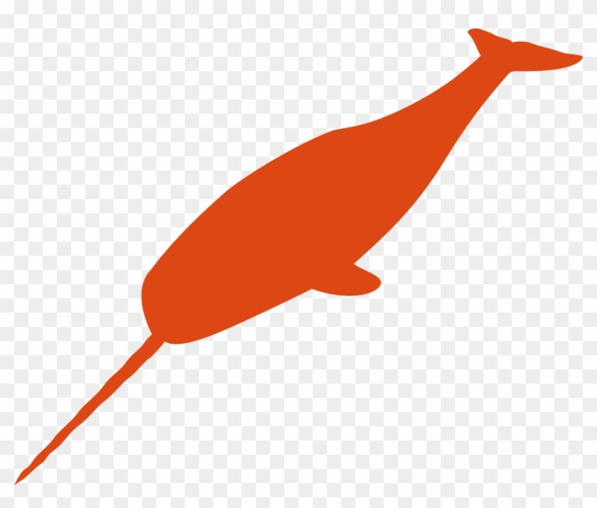 Orange Narwhals #202478