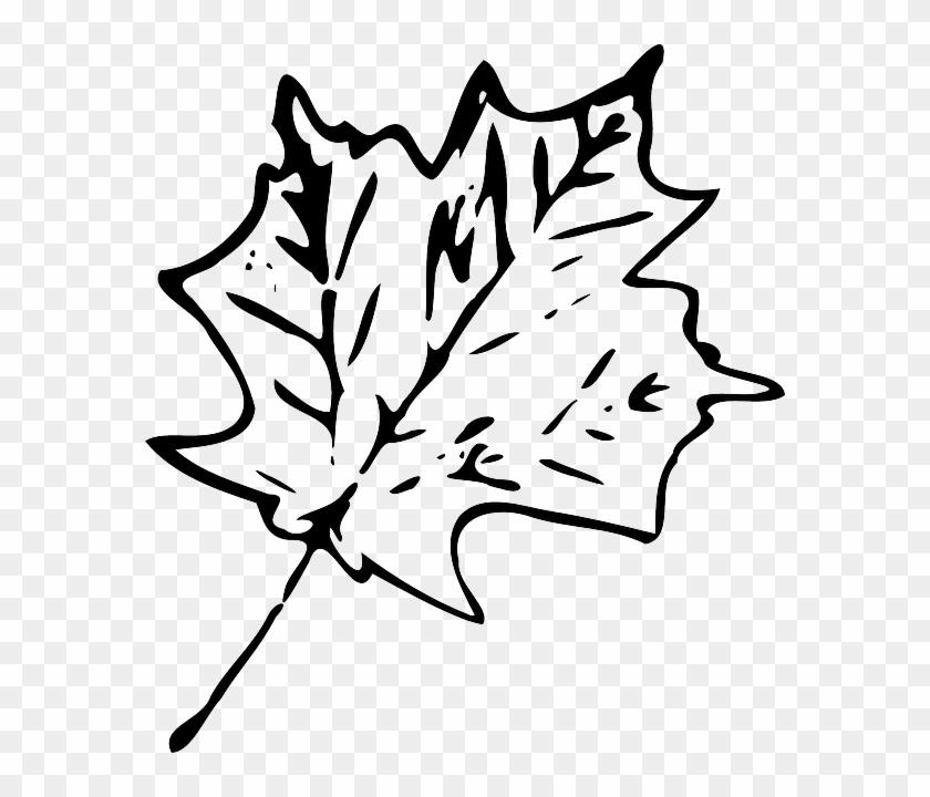 Foliage Maple, Fall, Leaf, Foliage - Black And White Leaf Transparent #1269616
