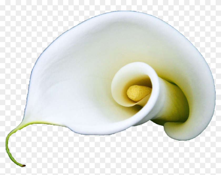 Arum Lily Flower White Lilium A Blooming White Calla - Lily Curl Flower Iphone 7 Plus Phone Case #1271533