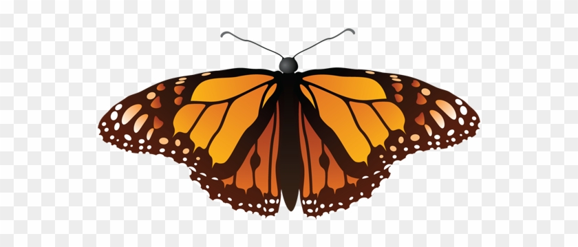 Download - Monarch Butterfly Shower Curtain #1277963