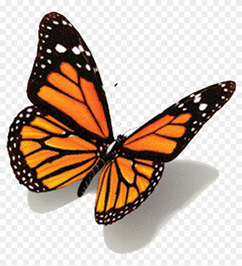 Animated Butterfly Gifs - Butterfly Tattoo Design #1279901