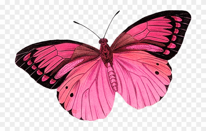 Butterfly Clipart Photo By - Purple Butterfly Tattoo Designs #1280291