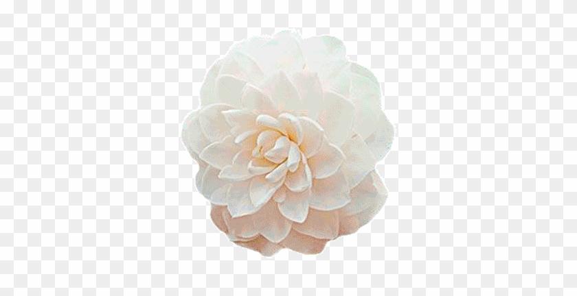 Logofullbloom - Flower Blooming Gif Png #1295376