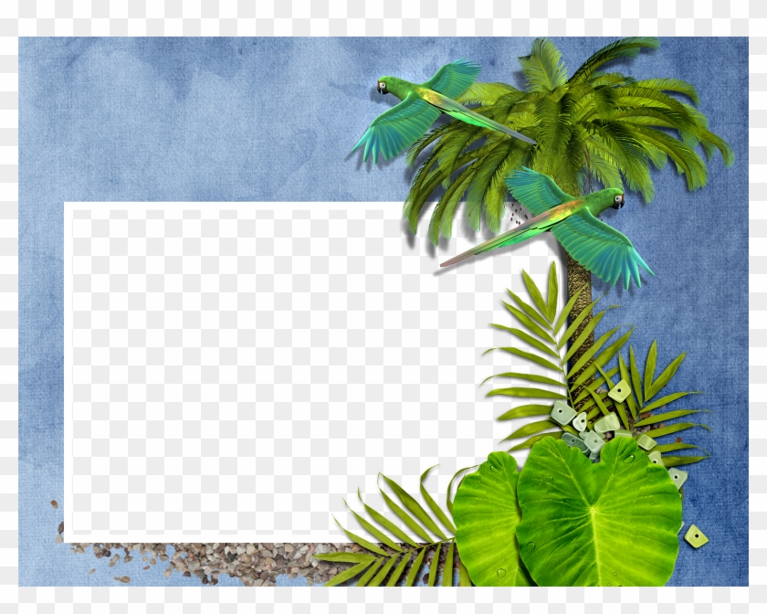 Exotic Tropical Leaves Wreath Border Frame Green Stock - Palm Tree ...