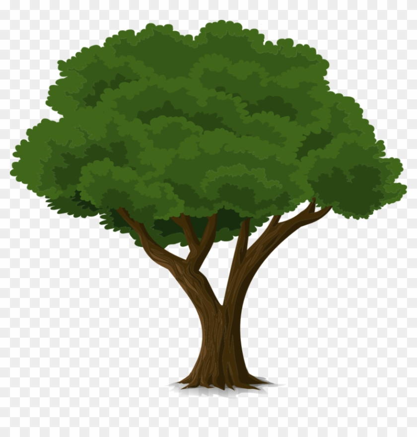 Tree Forest Trunk Nature Leaves Branches O - Community Trees Clip Art #27044