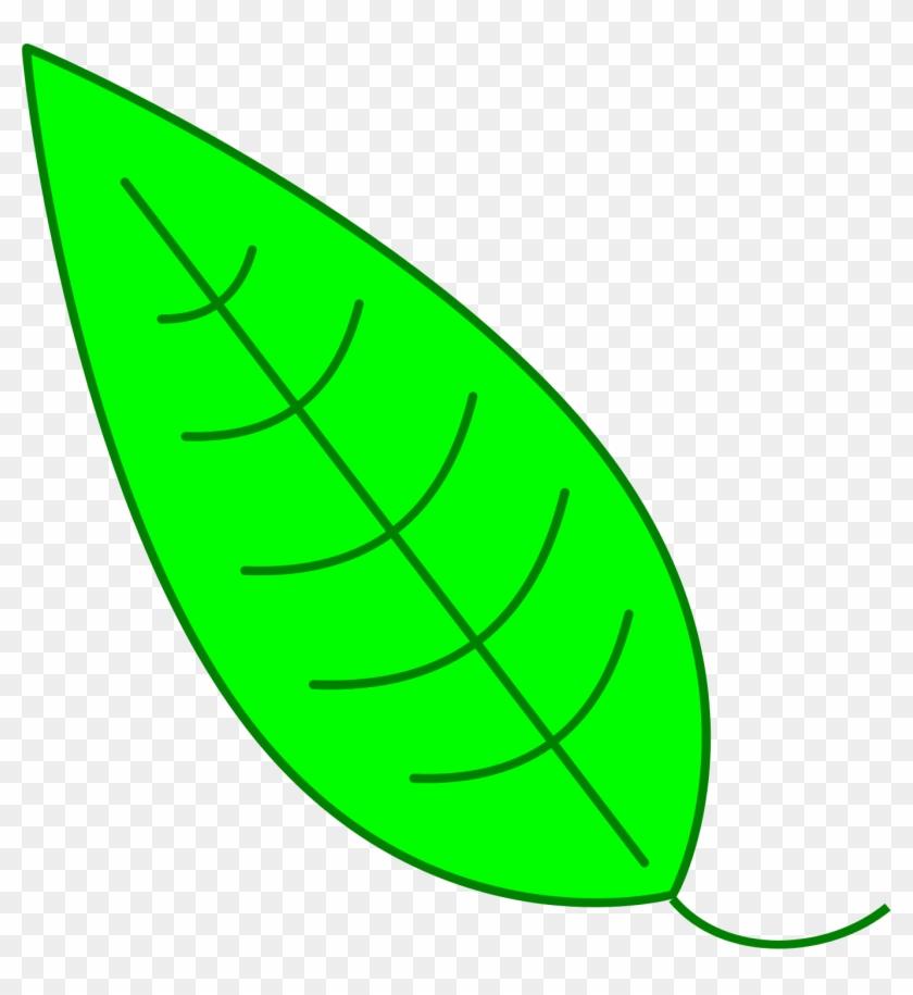 Green Simple Leaf - Hojas De Arbol Verde #27048