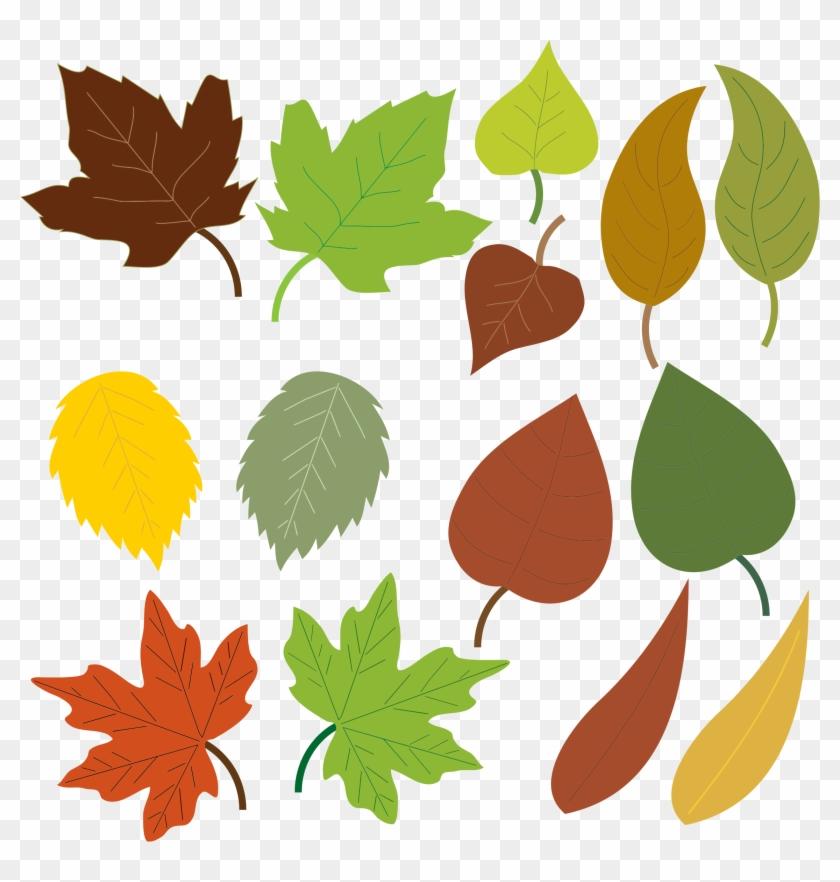 Leaf Clip Art Images - Formas De Hojas De Arboles #27141