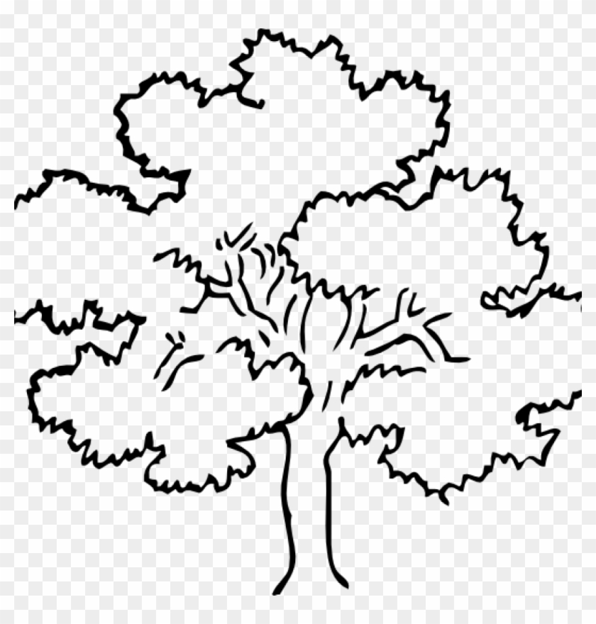 Tree Clipart Outline Oak Tree Clip Art At Clker Vector - Tree Drawing Black And White #27188