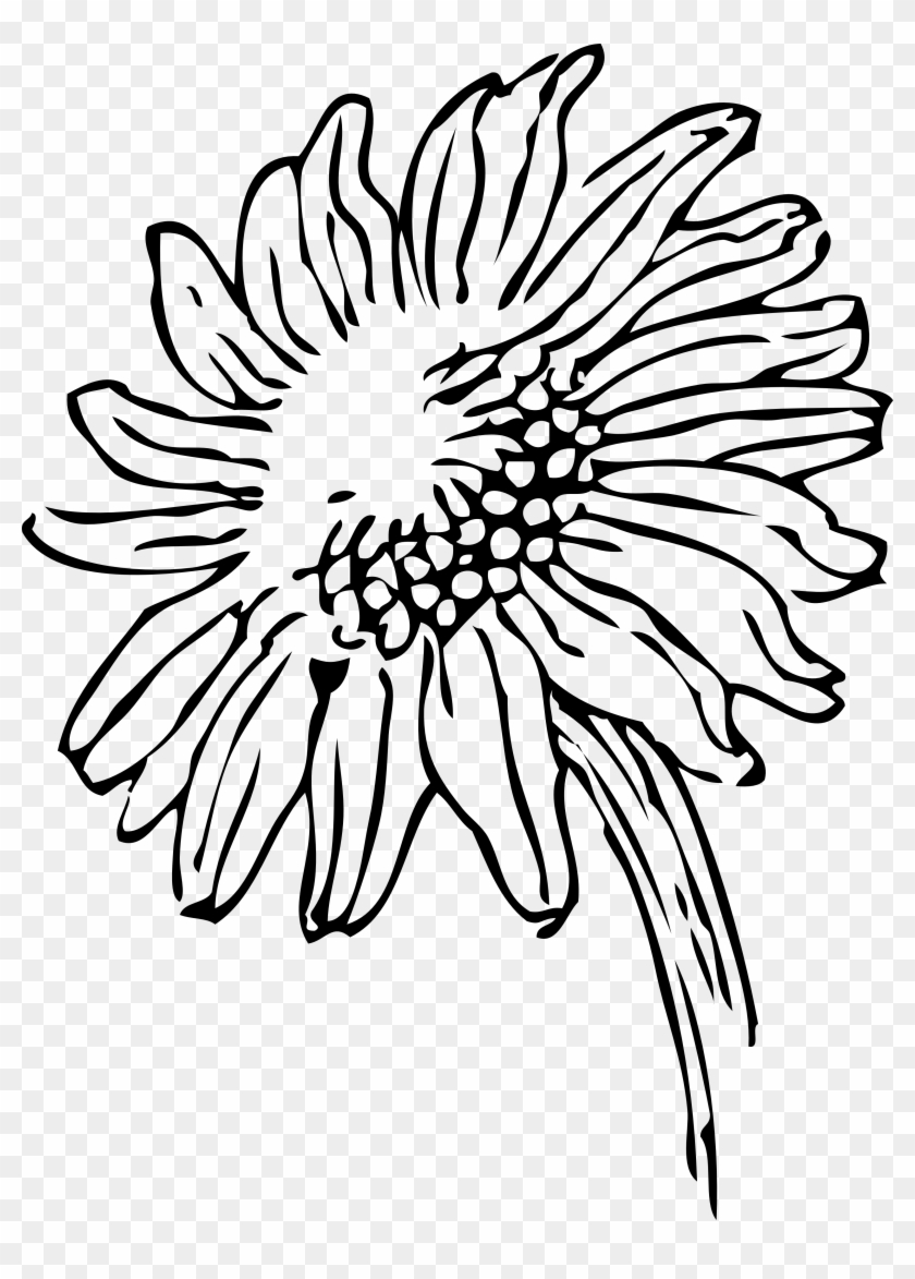 Plant Clipart Black And White - Black And White Sunflower Clipart #27369