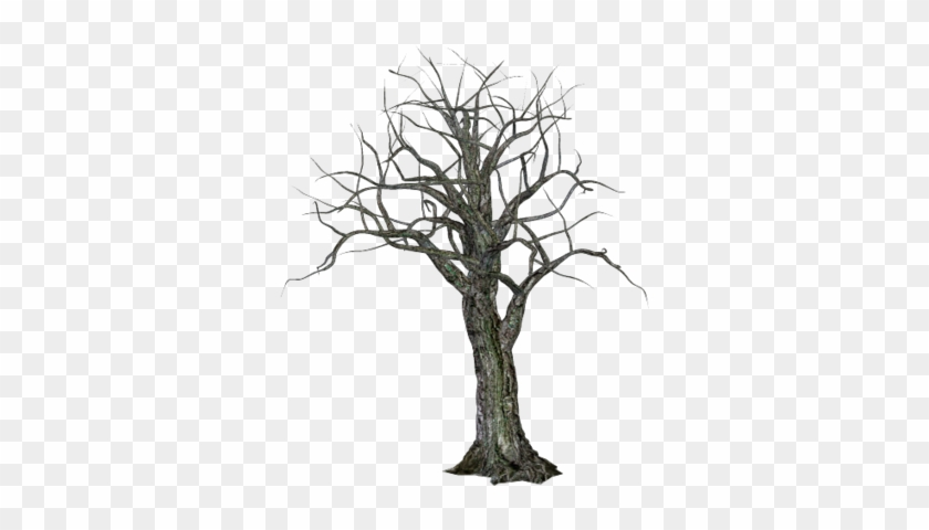 High Resolution Halloween Tree Png Icon Image - Creepy Tree Transparent Background #27460