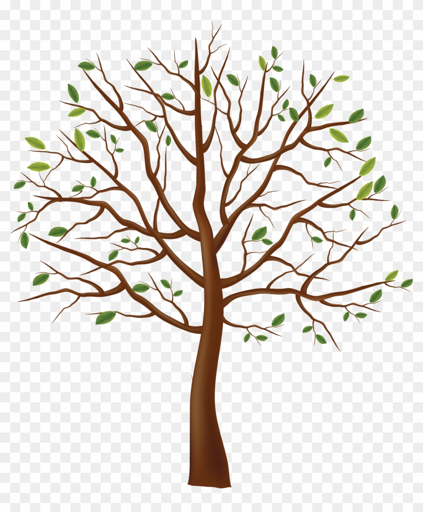 Tree Png Image - Tree Drawing Transparent Background #27909