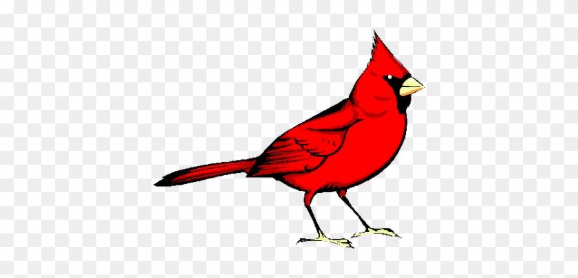 Cardinal - Red Bird #28045