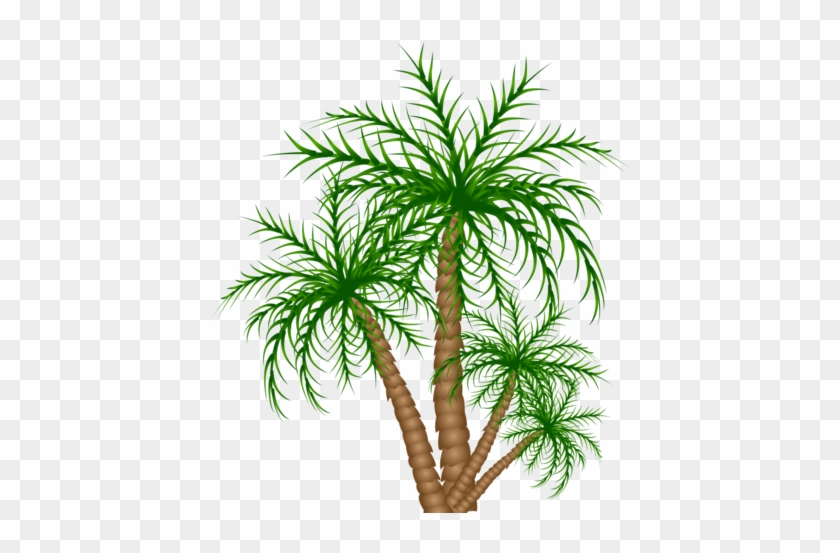 Congo Playfield Palm Trees - Roystonea #28572