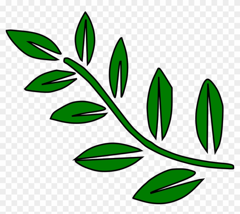 Fern Leaves Green Palm Tree Branches Branch Tree Branch Clip Art