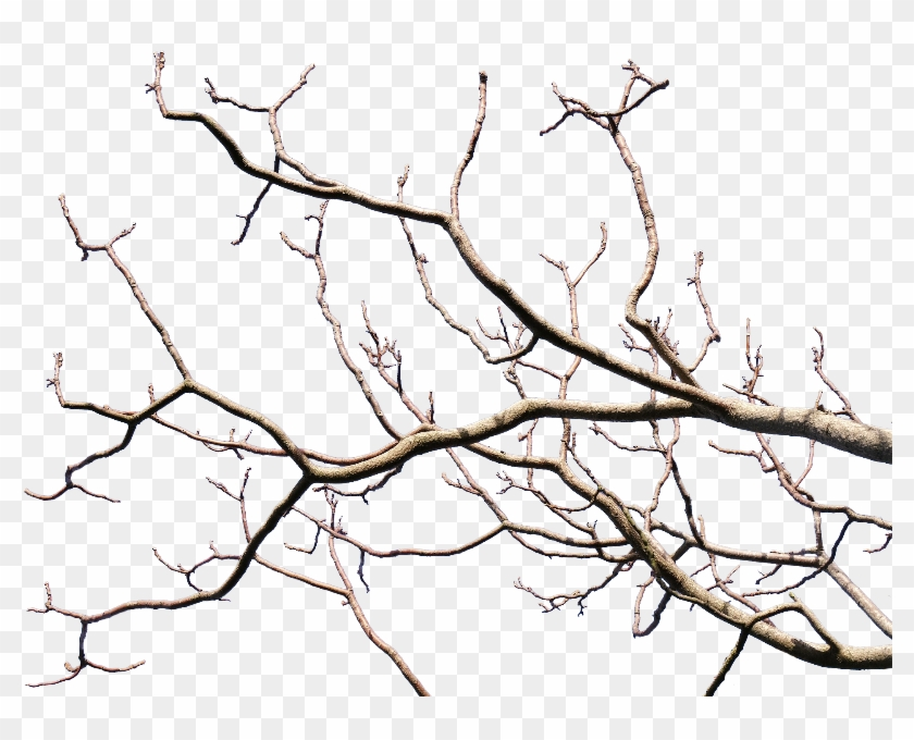Dead Tree Branch With Transparent Background Png - Tree Branch Transparent Background #28914